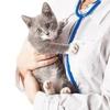 Оптика и инструменты для ветеринарии