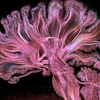 Жизнь под микроскопом. Человеческий мозг.