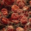 Жизнь под микроскопом. Состав крови человека
