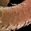 Жизнь под микроскопом: изучение структуры волос